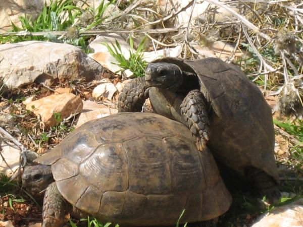 Tortoises.jpg