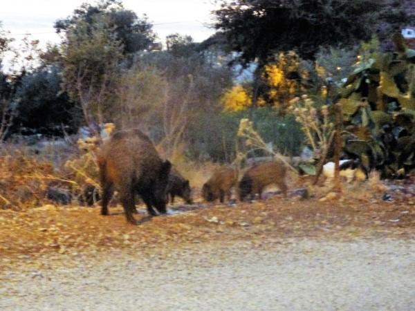 Piggies4.jpg