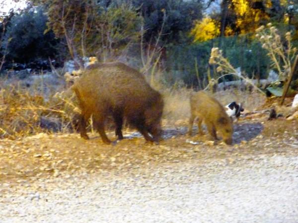 Piggies5.jpg